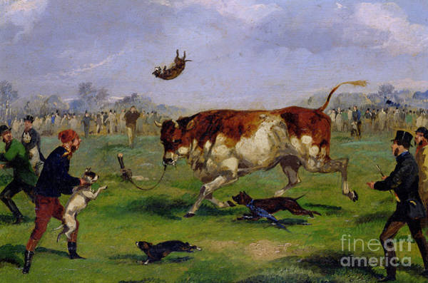 Wall Art - Painting - Bull Baiting by Samuel Henry Alken