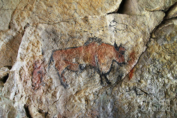 Wall Art - Photograph - Bull - Cave Painting In Prehistoric Style by Michal Boubin