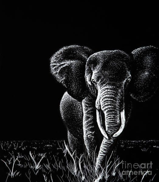 Scratchboard Wall Art - Drawing - Bull Elephant by Senecca Corsetti