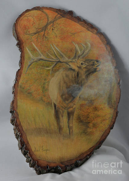 Bugling Drawing - Bull Elk by Gail Finger