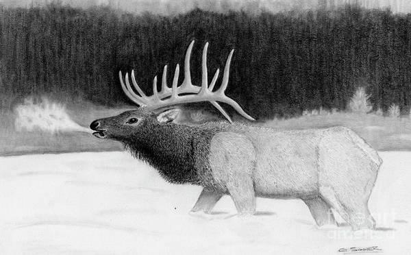 Bugling Drawing - Bull Elk by George Sonner