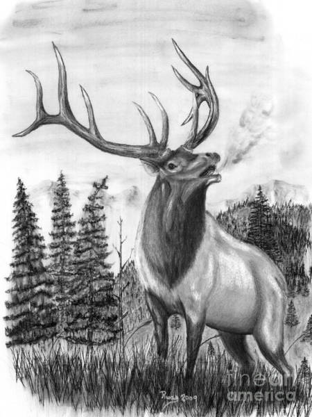 Elk Mountain Drawing - Bull Elk Issuing Challenge by Russ  Smith