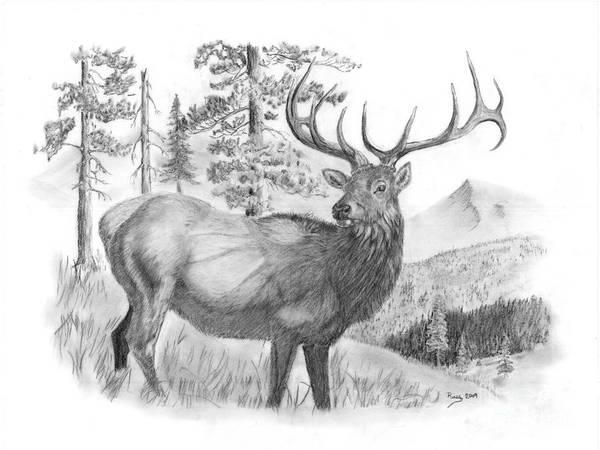 Elk Mountain Drawing - Bull Elk by Russ  Smith