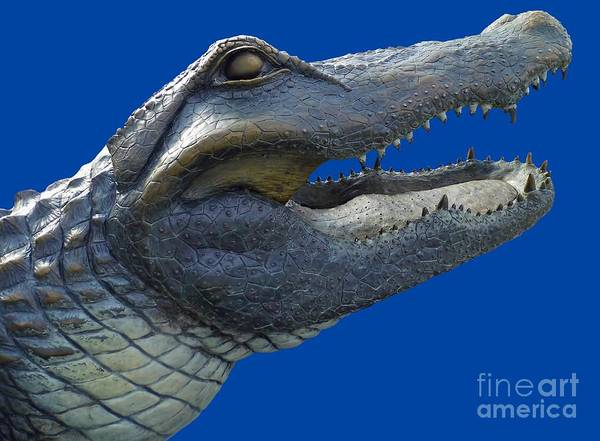 Photograph - Bull Gator Portrait Transparent For T Shirts by D Hackett