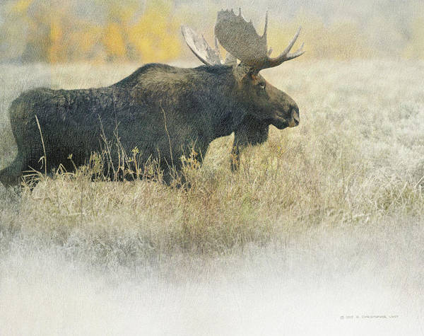 Teton National Park Digital Art - Bull Moose Autumn Meadow by R christopher Vest