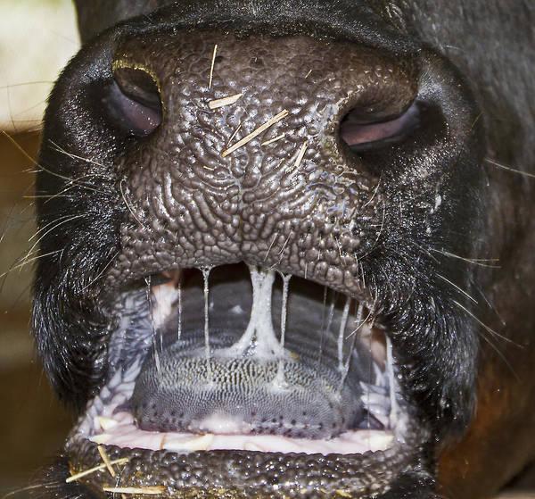 Photograph - Bull Nose by Bob Slitzan