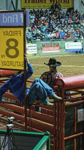 Photograph - Bull Riders At The Rodeo. Fort Worth 2013 by Chris Honeyman