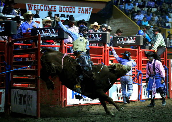 Photograph - Bull Riding At The Grand National Rodeo by John King