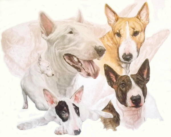 Wall Art - Mixed Media - Bull Terrier Medley by Barbara Keith