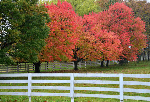 Photograph - Bull Valley Ranch Fall Colors by Ray Mathis