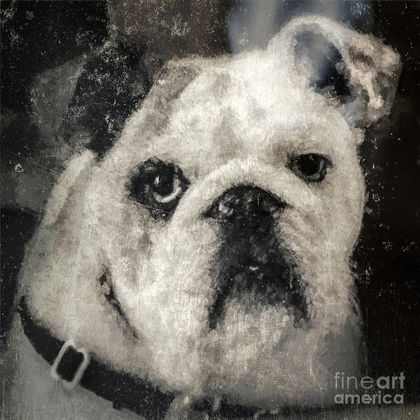 Photograph - Bulldog by Andrea Anderegg