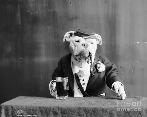 Turn Of The Century Wall Art - Photograph - Bulldog, C1905 by Granger