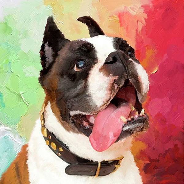 Painting - Bulldog by Portraits By NC