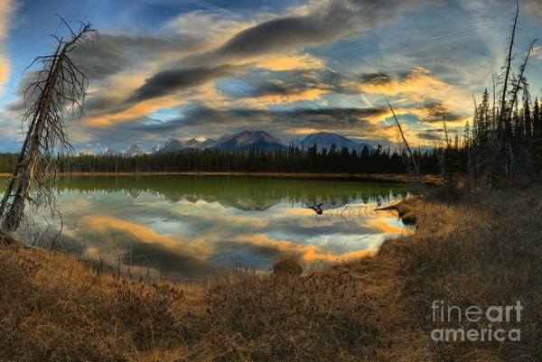 Photograph - Buller Pond Reflections by Adam Jewell