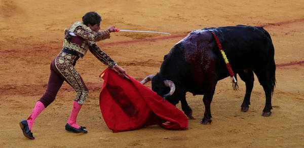 Photograph - Bullfighting 16 by Andrew Fare