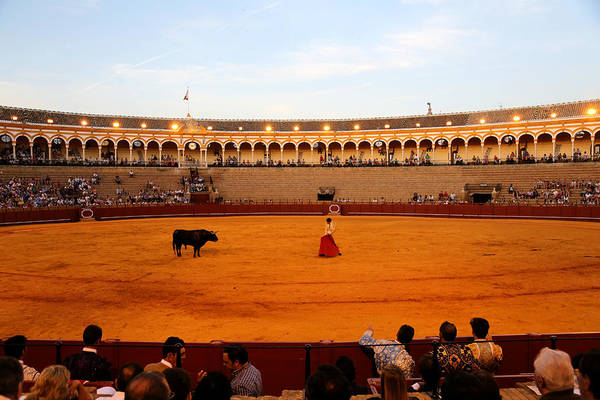 Photograph - Bullfighting 19 by Andrew Fare