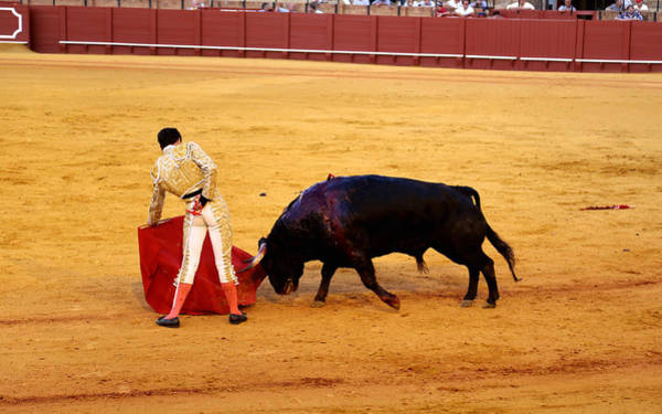 Photograph - Bullfighting 20 by Andrew Fare