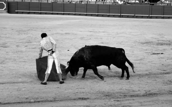 Photograph - Bullfighting 20b by Andrew Fare