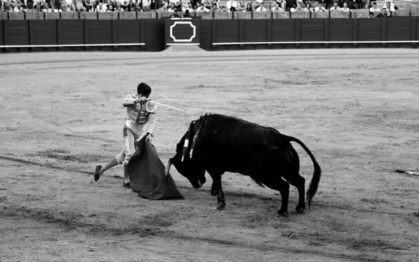 Photograph - Bullfighting 21b by Andrew Fare