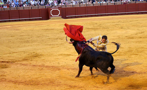 Photograph - Bullfighting 23 by Andrew Fare