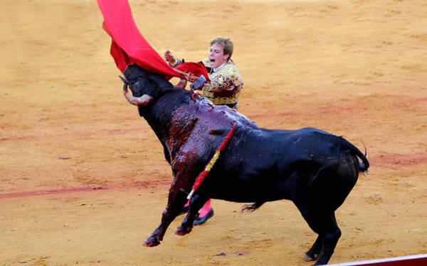 Photograph - Bullfighting 28 by Andrew Fare