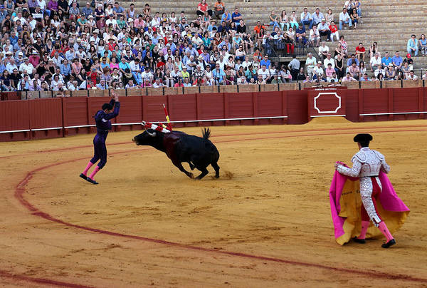 Photograph - Bullfighting 35 by Andrew Fare