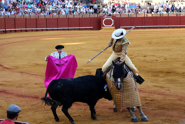 Photograph - Bullfighting 6 by Andrew Fare