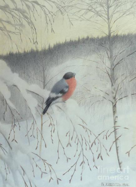 Twig Mixed Media - Bullfinch On A Frosty Twig by O Vaering