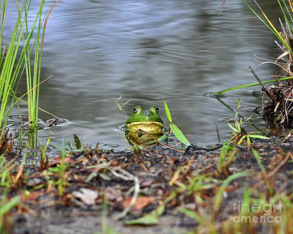 Bull Frog Photograph - Bullfrog Blending by Al Powell Photography USA
