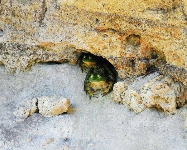 Bull Frog Photograph - Bullfrog Bunker by Al Powell Photography USA
