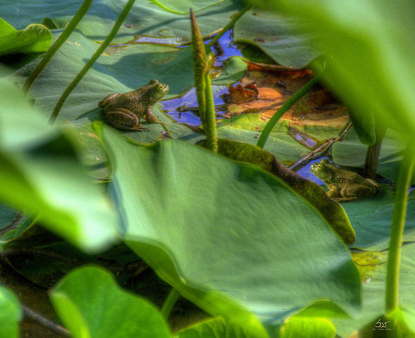 Photograph - Bullfrog Meeting by Sam Davis Johnson