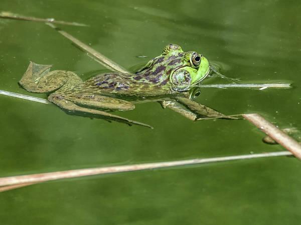 Photograph - Bullfrog by Tam Ryan