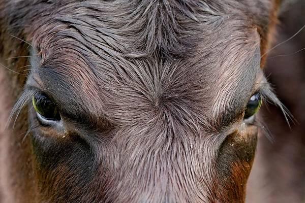 Photograph - Bull's Eye by KJ Swan