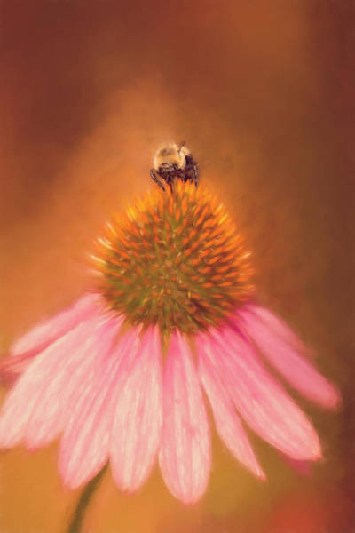 Wall Art - Photograph - Bumblebee On Pink Coneflower by SharaLee Art
