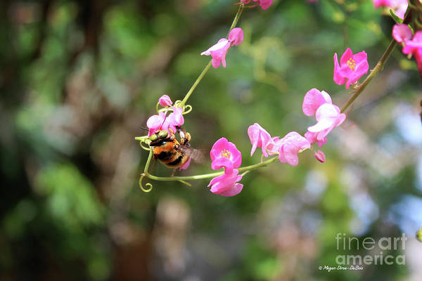 Photograph - Bumble Bee1 by Megan Dirsa-DuBois