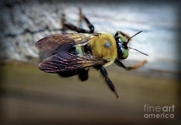 Photograph - Bumblebee by Karen Adams