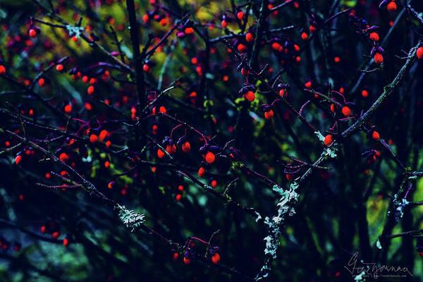 Photograph - Reds by Gene Garnace
