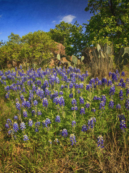 Photograph - Bunch Of Bluebonnets by Charles McKelroy