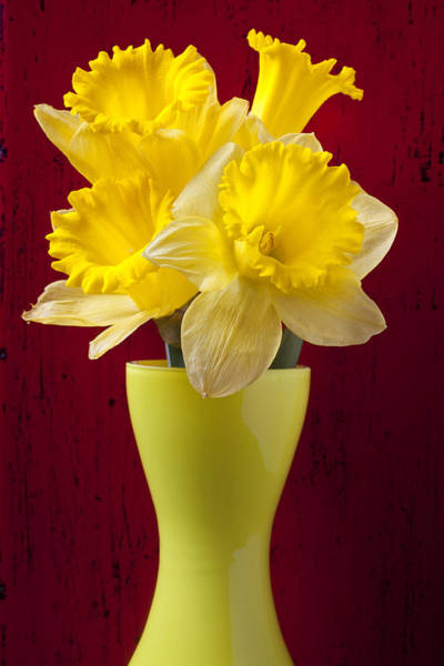 Daffodils Wall Art - Photograph - Bunch Of Daffodils by Garry Gay