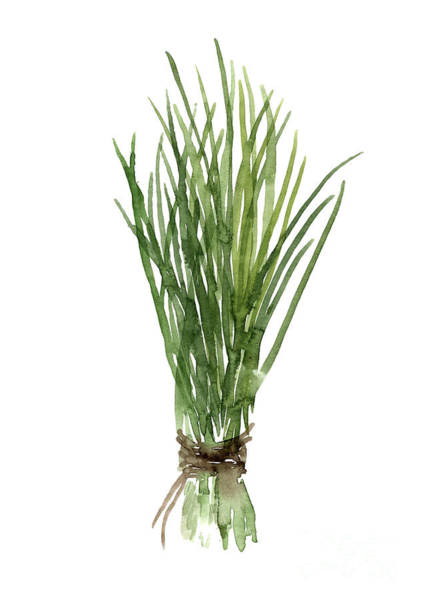 Fresh Painting - Bundle Of Fresh Chives Tied With Brown String by Joanna Szmerdt