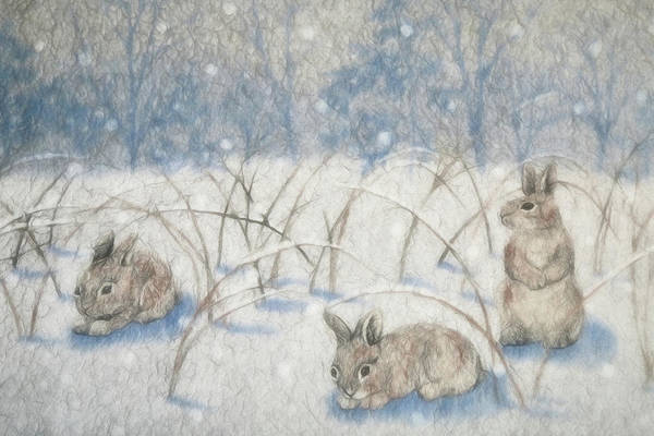 Cottontail Photograph - Bunnies In The Snow by Donna Kennedy