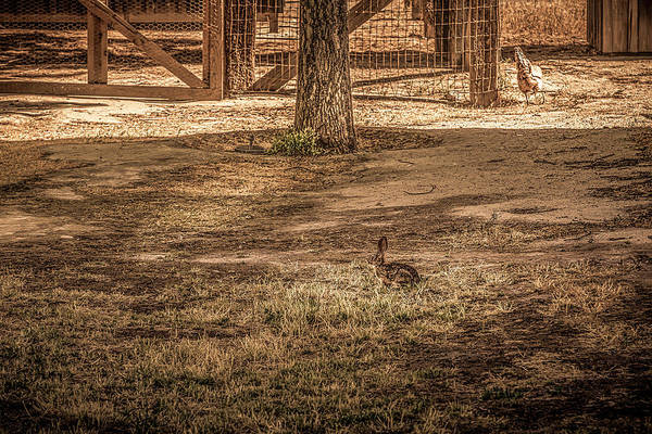 Photograph - Bunny And Hen by Gene Parks