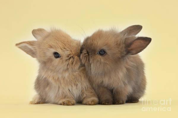 Bunny Kisses Art Print