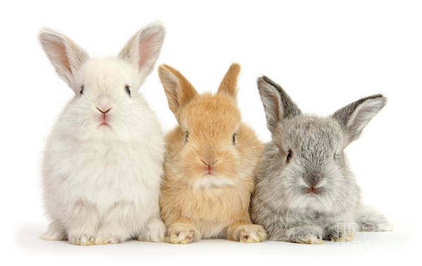 Photograph - Bunny Marvelous by Warren Photographic