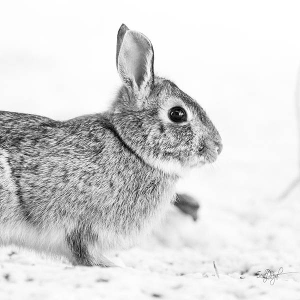 Rabbit Photograph - Bunny Pillow by Everet Regal