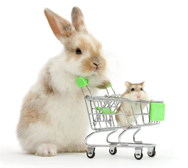 Photograph - Bunny Shopping by Warren Photographic