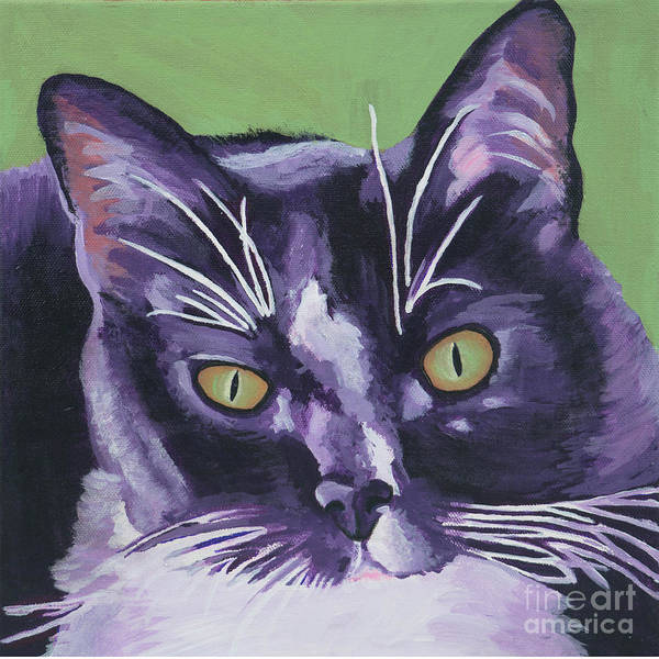 Painting - Tuxedo Black And White Cat by Robyn Saunders