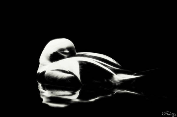 Photograph - Buoyant Slumber by Dee Browning