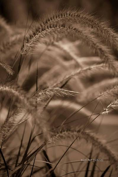 Pennisetum Photograph - Burgundy Giant by DigiArt Diaries by Vicky B Fuller