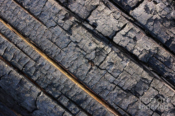 Photograph - Burnt Bark by Natalie Dowty